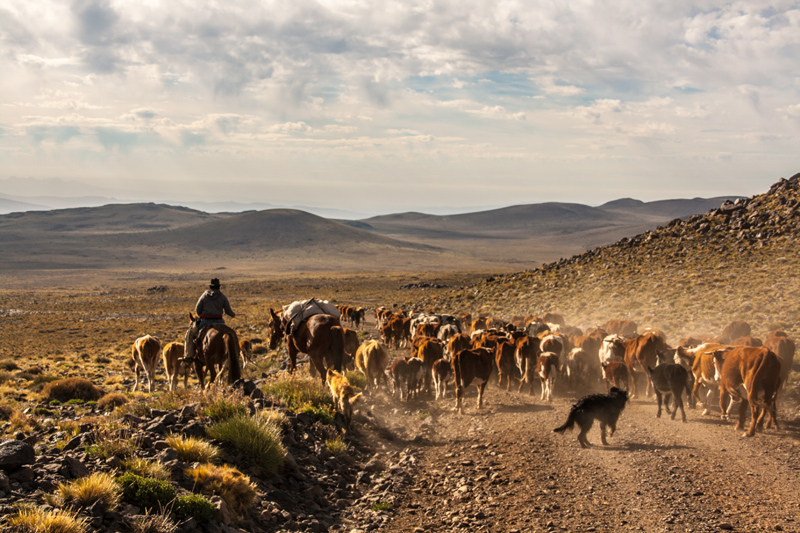 A long, long, slow descent on a bad road interrupted by gauchos herding their cows in the morning.